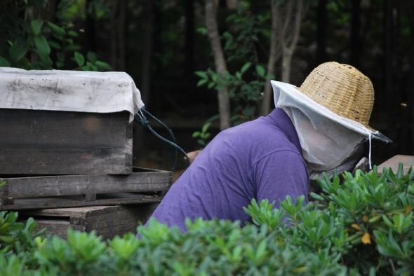 beekeeper-19102_960_720