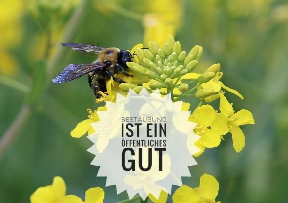 bestaeubung_Gut